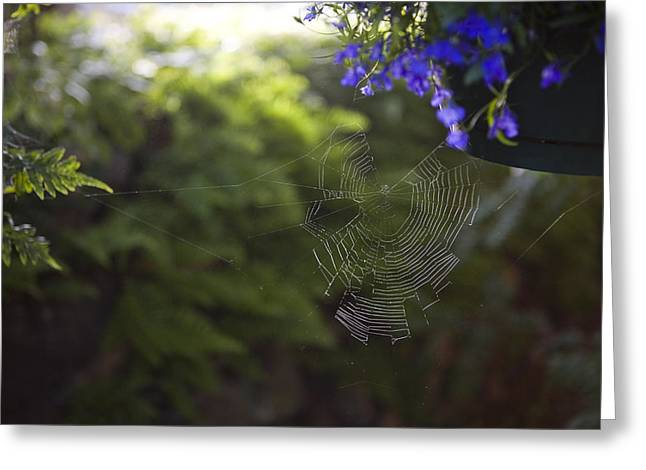 A Spider Web In A Garden Greeting Card by Taylor S. Kennedy