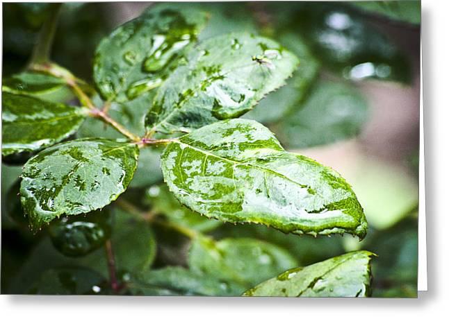 A Splash Of Green Greeting Card by Steve Buckenberger