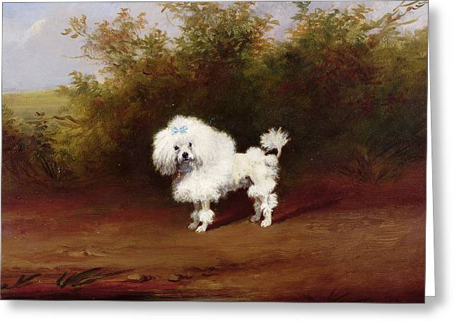 A Toy Poodle In A Landscape  Greeting Card by Frederick French
