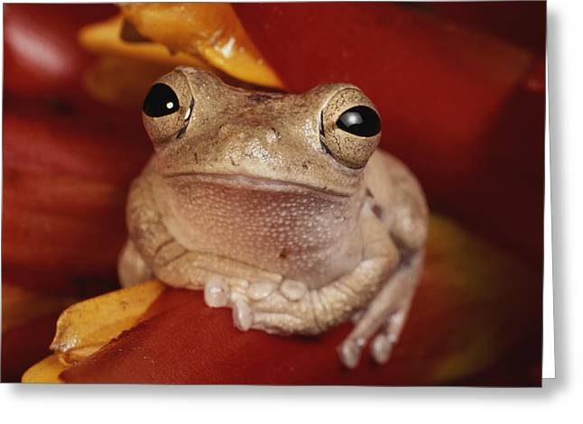 A Tree Frog Shelters In A Bromeliad Greeting Card