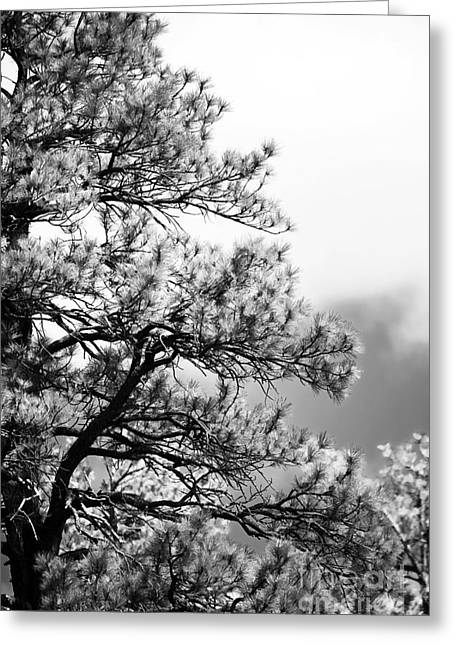 A Tree In Sedona Greeting Card by John Rizzuto