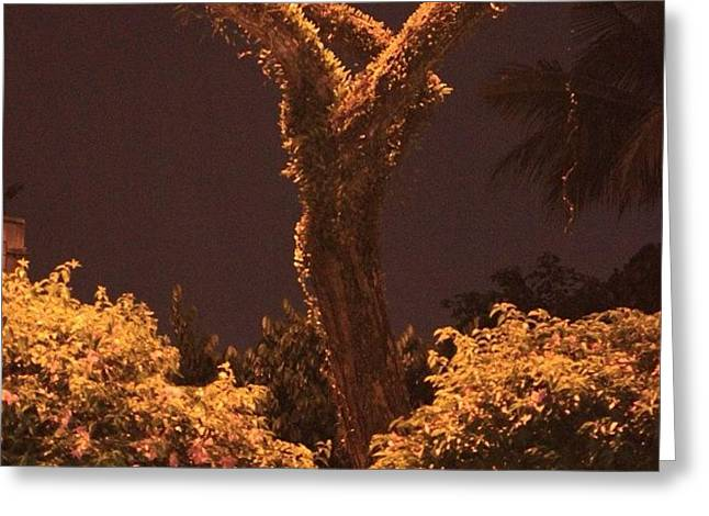A Tree Lonely At Night, By My Lens Greeting Card