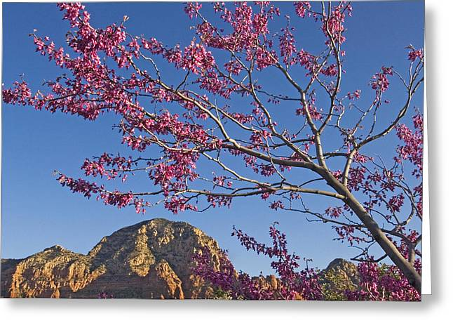 A Tree With Pink Blossoms In Red Rock Greeting Card by Axiom Photographic