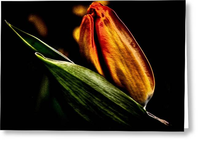 A Tulip With Sheen Greeting Card by David Patterson