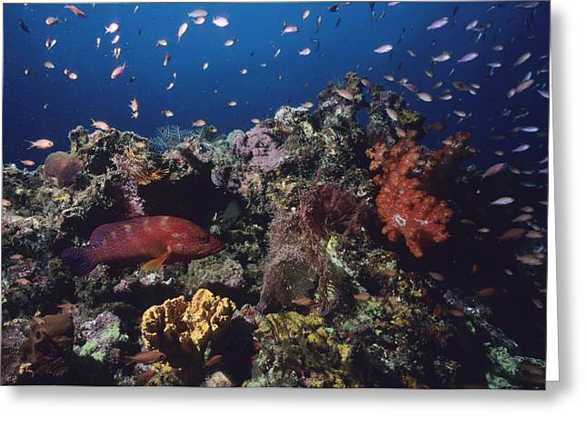 A Vibrant Reef Scene With Varieties Greeting Card