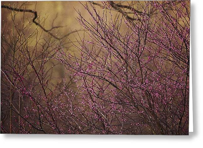 A View Of A Dew-covered Bush In Bloom Greeting Card by Joel Sartore