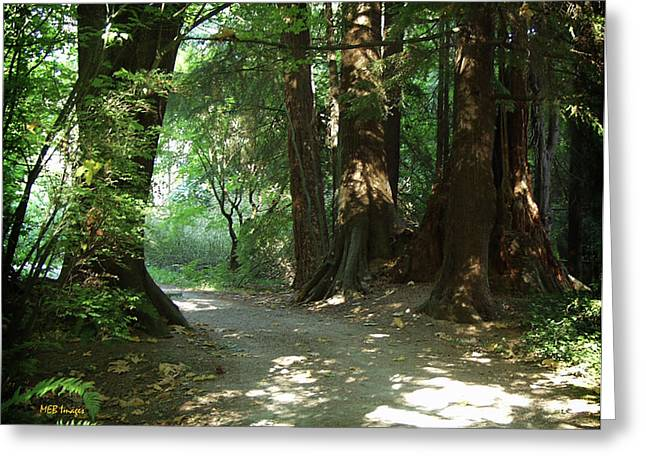 A Walk In The Forest Greeting Card by Margaret Buchanan