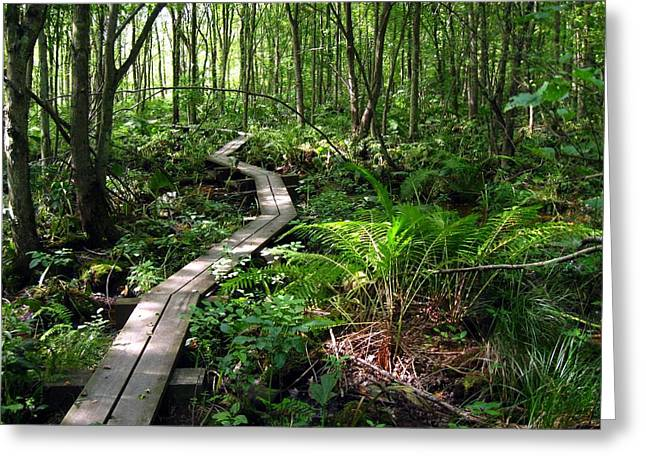 Greeting Card featuring the photograph A Walk In The Woods by Doug McPherson