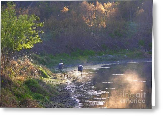 A Walk Through Morning Sunshine Greeting Card by Carol Groenen