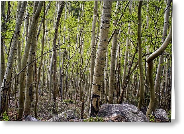 A Walk Through The Aspen Greeting Card by Ellen Heaverlo