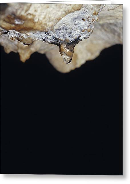 A Water Drop Seeps From A Stalagtite Greeting Card by Jason Edwards