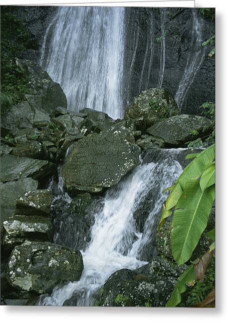 A Waterfall In El Yunque, Puerto Rico Greeting Card by Taylor S. Kennedy