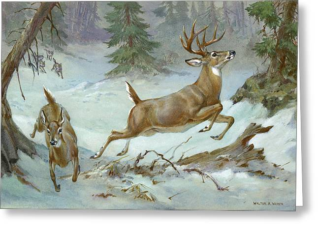 A White Tail Buck And Doe Flee Greeting Card by Walter A. Weber