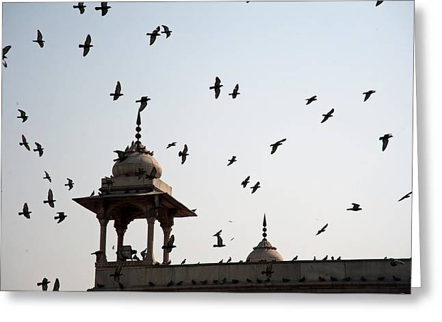 A Whole Flock Of Pigeons On The Top Of The Ramparts Of The Red Fort In New Delhi Greeting Card by Ashish Agarwal