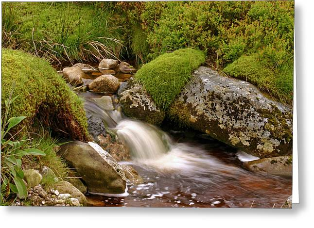A Wicklow Stream Greeting Card by Martina Fagan
