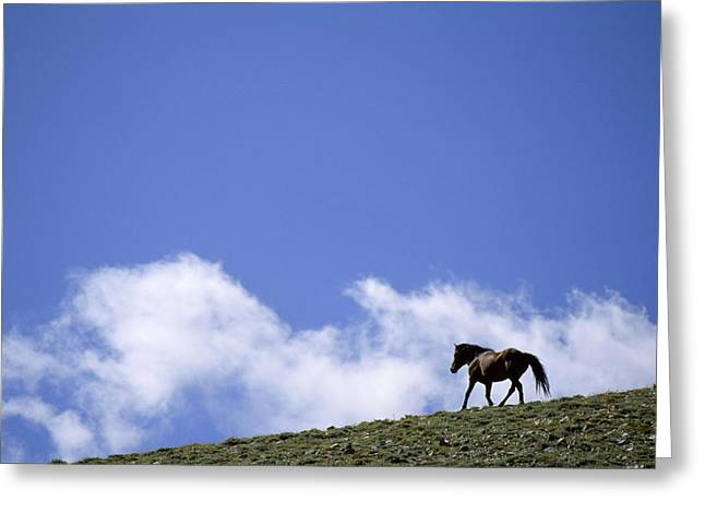 A Wild Mustang On The Crest Of A Hill Greeting Card by Gordon Wiltsie