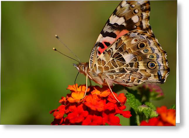 A Wing Of Beauty Greeting Card