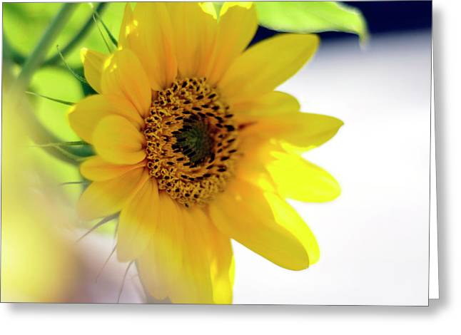 A Wish For Sunshine In Your Day Greeting Card