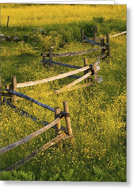 A Wooden Rail Fence Surrounded By Greeting Card by David Chapman