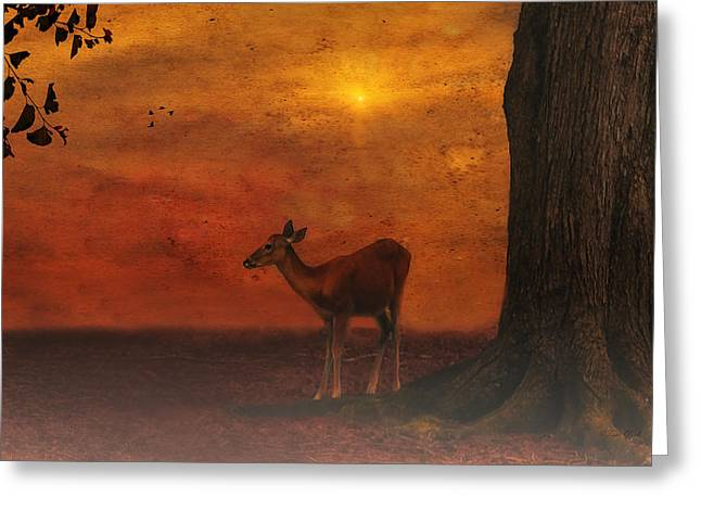 A Young Deer Greeting Card by Tom York Images