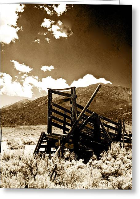 Abandoned Cattle Shoot Greeting Card