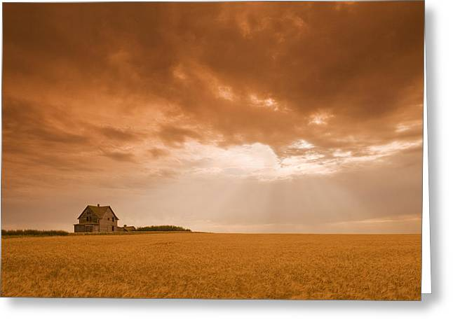Abandoned Farm In Durum Wheat Field Greeting Card by Dave Reede