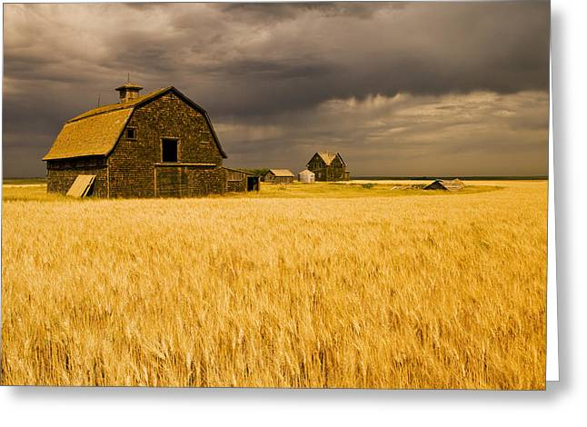 Abandoned Farm, Wind-blown Durum Wheat Greeting Card by Dave Reede