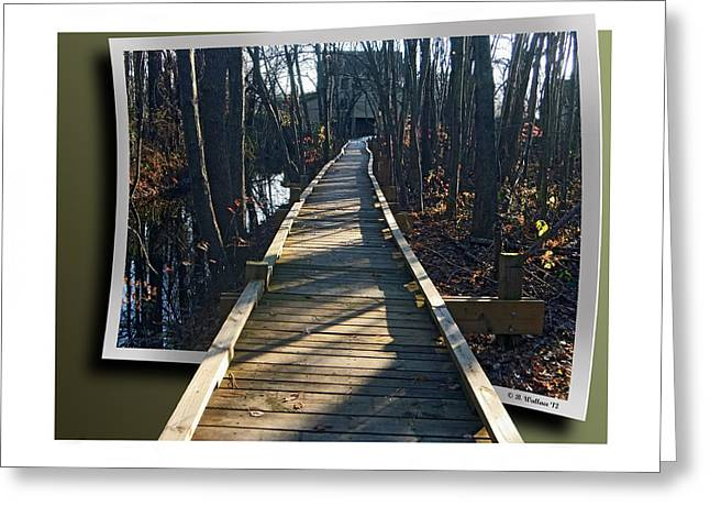 Abbotts Nature Trail Greeting Card by Brian Wallace