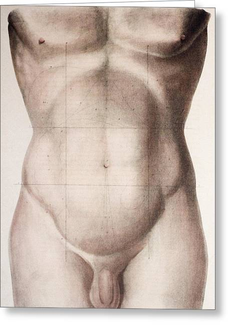 Abdominal Regions Greeting Card by Mehau Kulyk