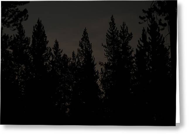 Above The Pines Greeting Card by Arlyn Petrie
