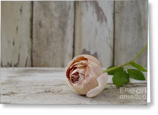 Abraham Darby Greeting Card