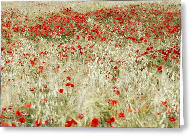 Abstract Poppies Greeting Card by Guido Montanes Castillo