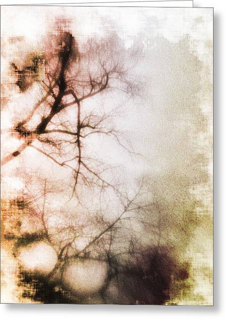 Abstract Trees Greeting Card by David Ridley