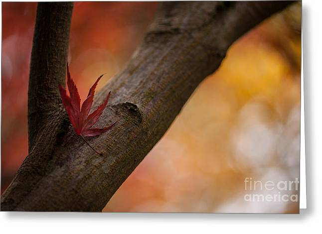 Acer Soliloquy Greeting Card by Mike Reid