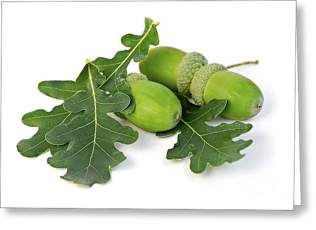 Acorns With Oak Leaves Greeting Card by Elena Elisseeva