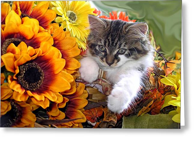 Adorable Baby Animal - Cute Furry Kitten In Yellow Flower Basket Looking Down - Kitty Cat Portrait Greeting Card by Chantal PhotoPix