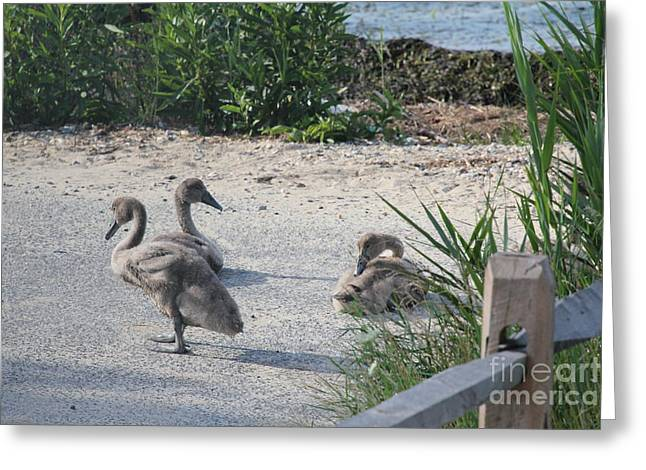 Adorable Ducklings Greeting Card by Scenesational Photos