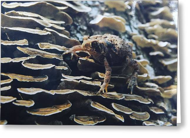 Greeting Card featuring the photograph Adventurous Toad 2 by Gerald Strine