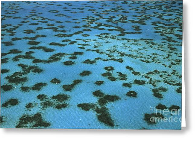 Aerial View Of Great Barrier Reef Greeting Card by L Newman and A Flowers and Photo Researchers