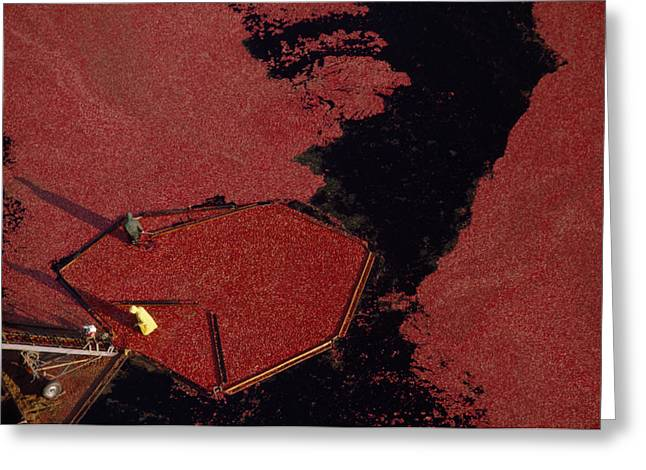 Aerial View Of The Harvesting Greeting Card by Chris Johns