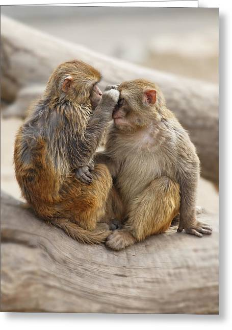 Affection Greeting Card by George Oze