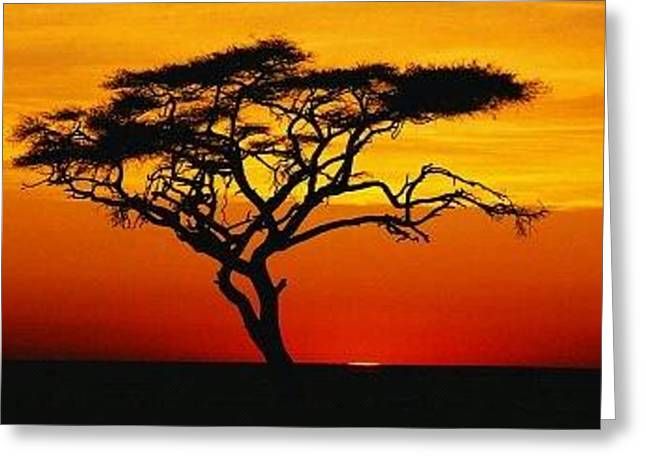 Africa Greeting Card by Robert Anderson