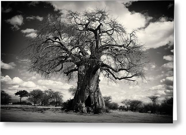 African Baobabs Tree Greeting Card by Jess Easter