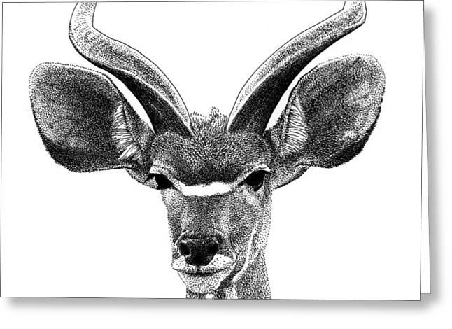 African Kudu Greeting Card
