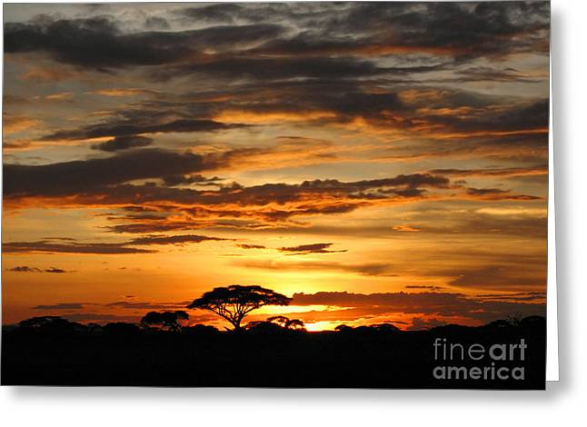 Greeting Card featuring the photograph African Sunset by Jacqi Elmslie