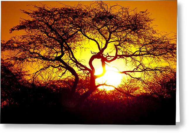 African Tree Greeting Card