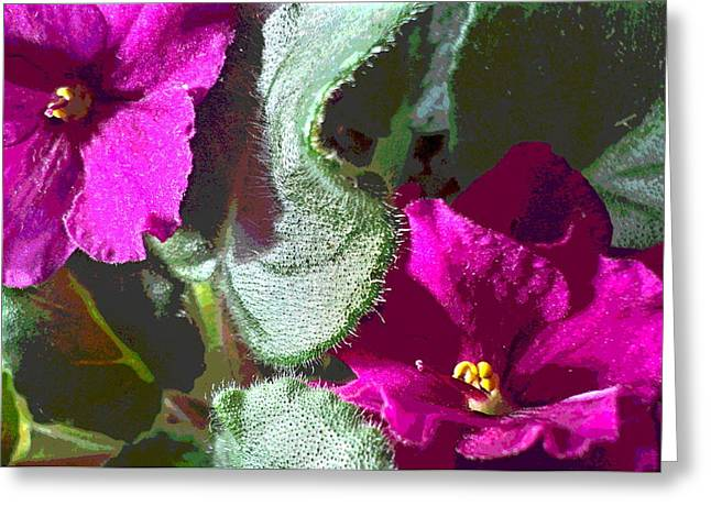African Violet Leaf And Blooms Greeting Card by Padre Art