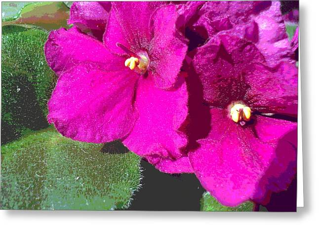 African Violet Texture Greeting Card