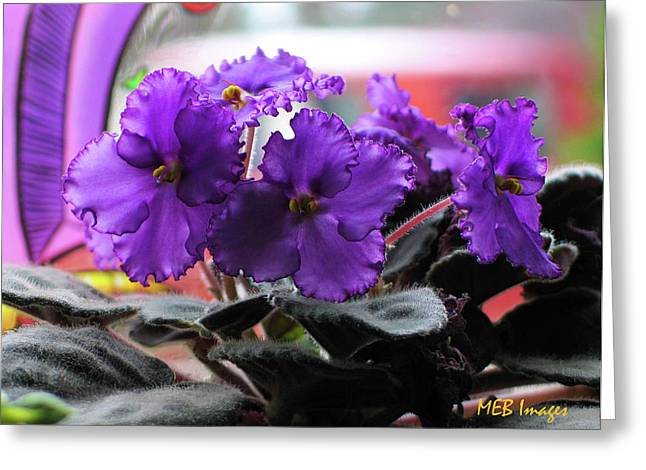 African Violets Greeting Card by Margaret Buchanan