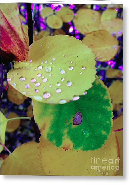 After Rain Greeting Card by Michelle Bergersen